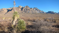 Organ Mountains with Yucca