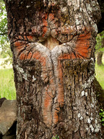 Cross in oak tree Mexico