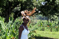 Young woman carrying firewood Haiti